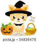 チワワ 犬 ハロウィンのイラスト 34836470