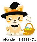 チワワ 犬 ハロウィンのイラスト 34836471