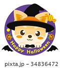 チワワ 犬 ハロウィンのイラスト 34836472