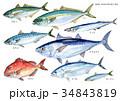 DHA EPA 青魚のイラスト 34843819