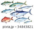 DHA EPA 青魚のイラスト 34843821