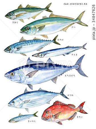 DHA、EPAを多く含む青魚(魚名あり) 34847626