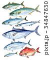 DHA EPA 青魚のイラスト 34847630