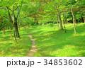緑 道 小道の写真 34853602