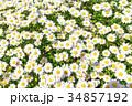 花 花壇 春の写真 34857192
