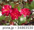 バラ 薔薇 花の写真 34863530