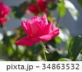 バラ 薔薇 花の写真 34863532