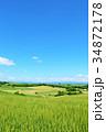北海道 夏の青空と美瑛の丘 34872178