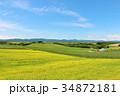 北海道 青空と菜の花の大地 34872181