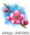 花 春 梅のイラスト 34872822