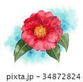 花 赤 植物のイラスト 34872824