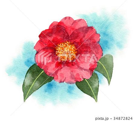 水彩で描いた赤い山茶花 34872824