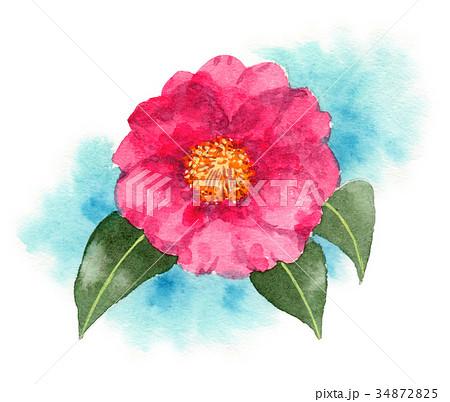 水彩で描いたピンクの山茶花 34872825