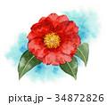 花 赤 植物のイラスト 34872826