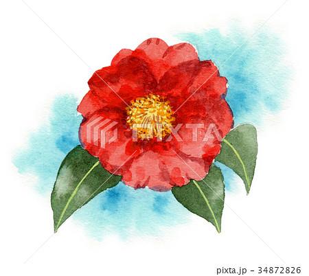 水彩で描いた赤い山茶花 34872826