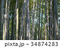 Famous bamboo grove at Arashiyama, Kyoto - Japan 34874283