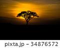 サバンナの夕日 34876572