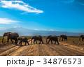 キリマンジャロと象の列 34876573