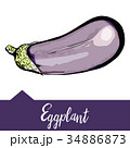 Vector illustration of eggplant depicted in hand 34886873