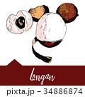 Vector illustration of a longan graphics 34886874