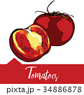 Vector illustration, tomatoes in hand drawn 34886878