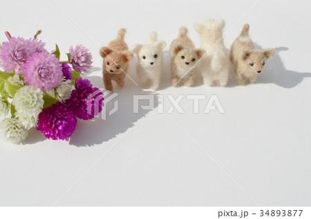 フェルトの子犬とセンニチコウ の写真素材 [34893877] - PIXTA