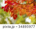 紅葉 もみじ 楓の写真 34893977