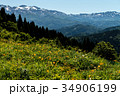 白山高山植物園 白山 植物園の写真 34906199