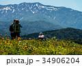 白山高山植物園 白山 植物園の写真 34906204