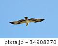 鳥 猛禽類 飛ぶの写真 34908270