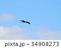 鳥 猛禽類 飛ぶの写真 34908273