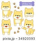 犬 柴犬 戌のイラスト 34920393