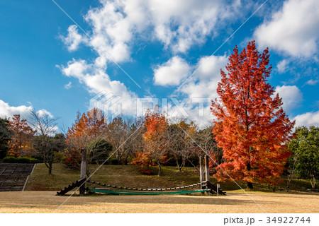三重県民の森 赤いフウの木と遊具 34922744