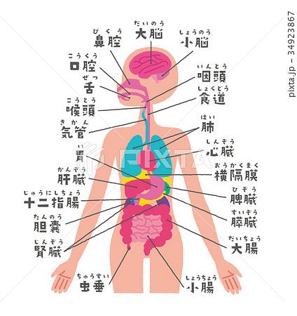 「内臓」の画像検索結果