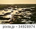 春国岱の水辺 34928974