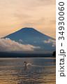 富士山 白鳥 夕暮れの写真 34930060