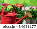 園芸 赤いジョウロとガーベラの花 34931177