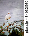 Watercolor Painting; The Snowy Egret on Driftwood 34932560