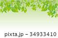 新緑の葉っぱのイメージイラスト 34933410