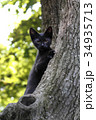 猫 子猫 黒猫の写真 34935713