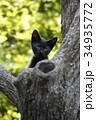 猫 子猫 黒猫の写真 34935772