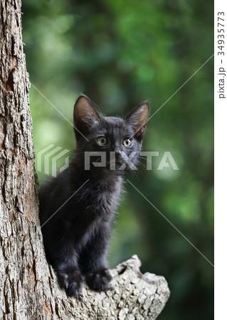 木の上の子猫(クロネコ) 34935773