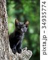 木の上の子猫(クロネコ) 34935774