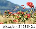 ハワイを代表する花/Hawaiian Flowers_8 34936421