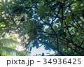 ハワイを代表する花/Hawaiian Flowers_9 34936425