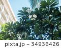 ハワイを代表する花/Hawaiian Flowers_10 34936426