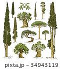 樹木 樹 ツリーのイラスト 34943119