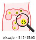 腸内 腸 腸内環境のイラスト 34946303