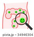 腸内 腸 腸内環境のイラスト 34946304