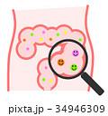 腸内 腸 腸内環境のイラスト 34946309